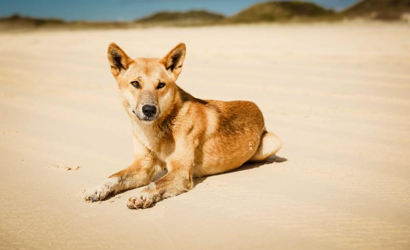 Fraser Island Tours and attractions